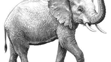 Elephantwildaidraster
